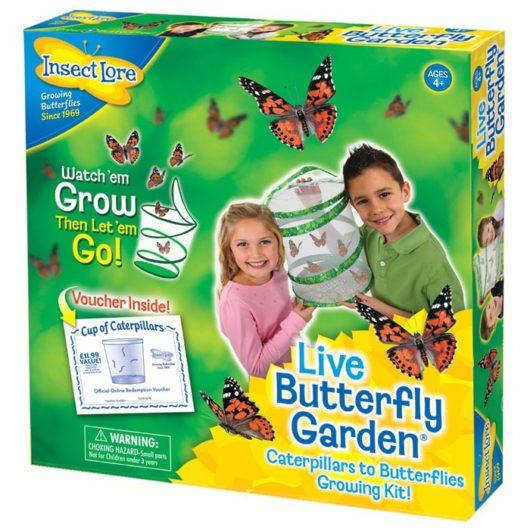 Hatch butterflies from caterpillars with this live butterfly garden set